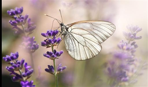 Transformiere dein Innerstes und du transformierst dein gesamtes Leben!